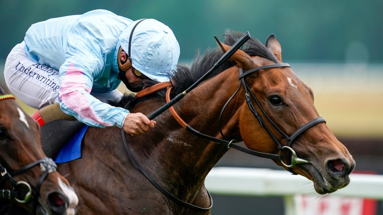 Stylistique: Stakes-winning daughter of Dansili will visit Galileo