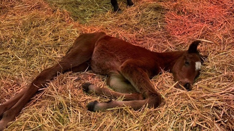 Meon Valley Stud's Ulysses colt out of Tropicana Bay