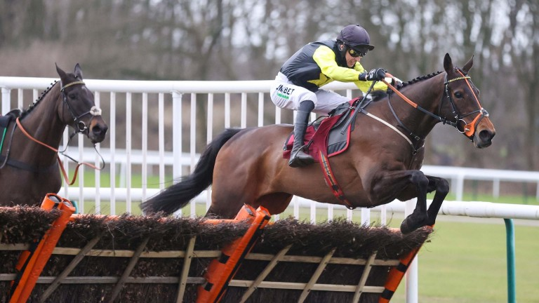 Alaphilippe: could head to the Albert Bartlett at Cheltenham following this impressive victory