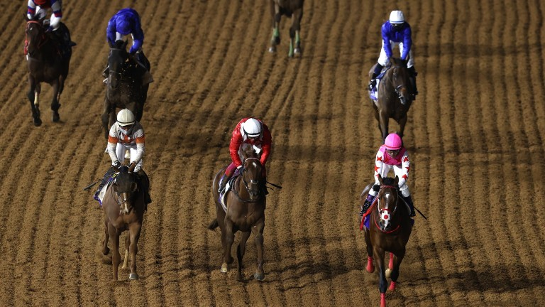 Pink Kamehameha (right): struck in the Saudi Derby, his first start on dirt