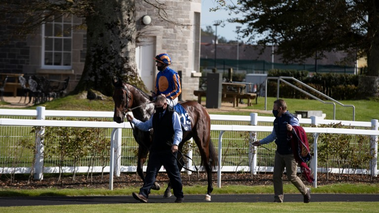 Van Gogh: the Coolmore-owned son of American Pharoah in the Curragh parade ring