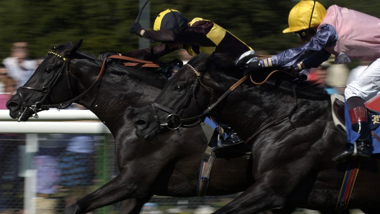 Passing Glance (black and yellow colours) in his racing pomp