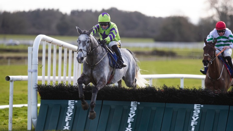 Zanavi: could be Cheltenham bound following his victory at Fairyhouse