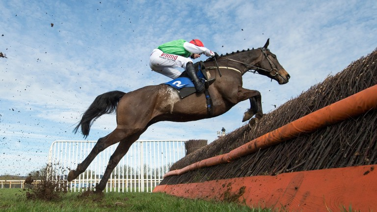 Dawson City: going for a third success in the Devon National