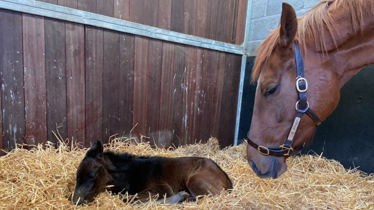 Boherguy Stud's Awtaad filly out of maiden mare Cosmic Approach