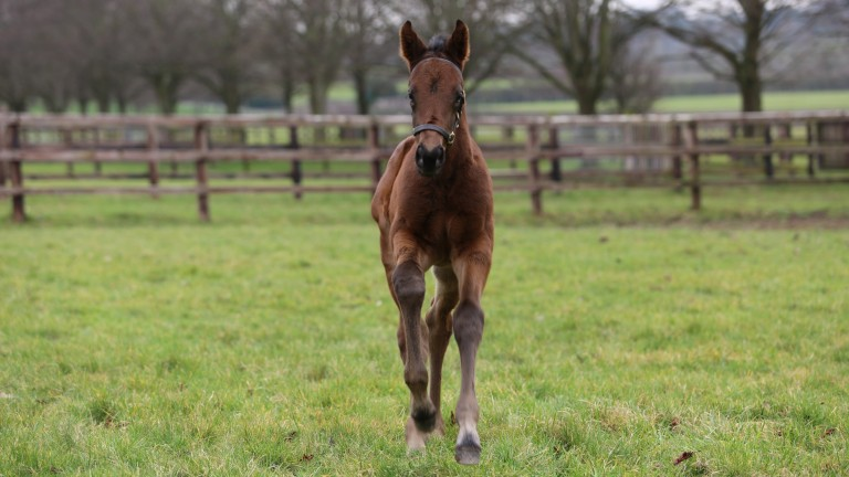 Juddmonte Farm's Dubawi colt out of Obligate, a Group 2-winning and Group 1-placed daughter of Frankel and Responsible