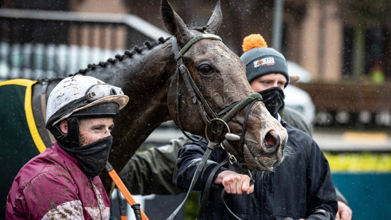 Daly Tiger: progressive chaser is well treated at the weights
