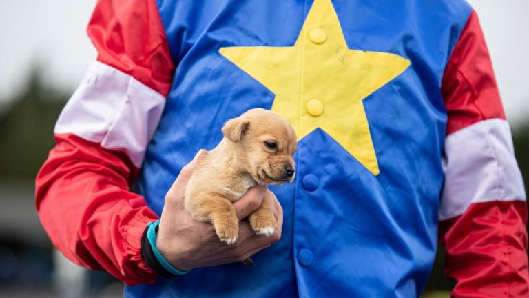 Jockey Adam Short's puppy Timmy makes a visit to Clonmel
