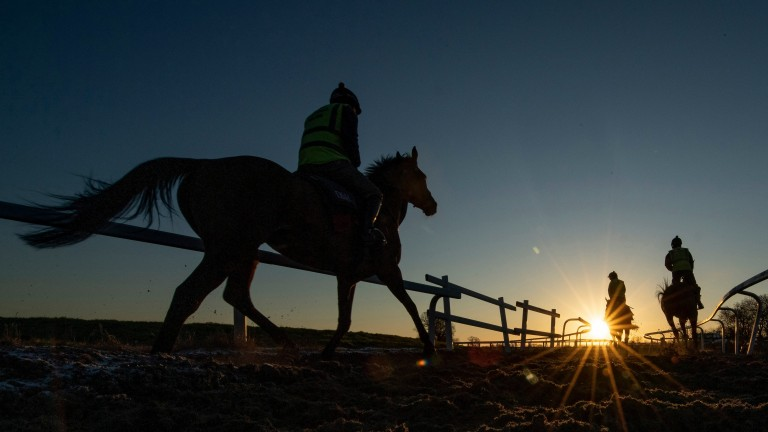 With jump racing cancelled due to the frozen conditions, there is the chance to capture first lot stepping out at Paul Nicholls' Ditcheat training base