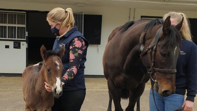 Claire Sayer and James Worrall's Muhaarar filly out of Celestial Empire