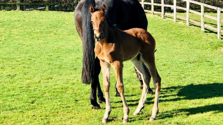 Goldford Stud's Kapgarde colt out of Whoops A Daisy