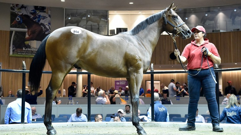 The Lord Kanaloa colt commanded plenty of attention from buyers