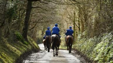 Colin Tizzard string take a stroll along a Dorset lane