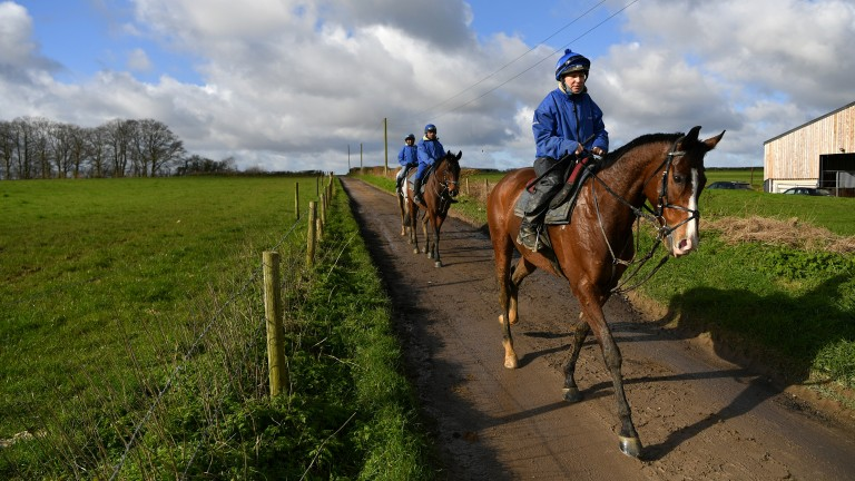 Colin Tizzard's inmates make their way back to the yard on Monday morning