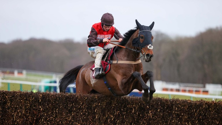 Bob And Co: solid claims for the Nicholls yard