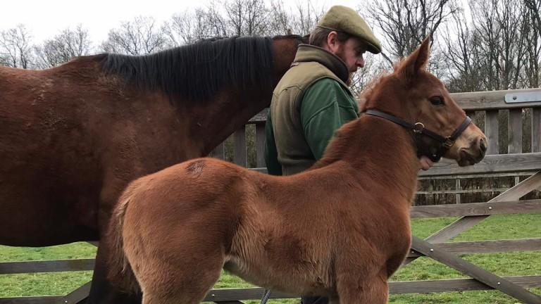 Charlock Stud's Rajasinghe colt out of Warsash
