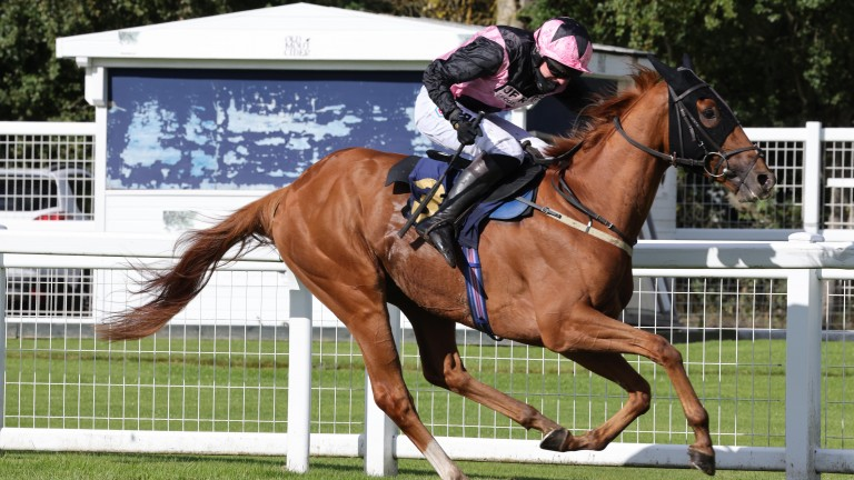Jorgie: suffered a fatal injury after victory at Musselburgh on Wednesday