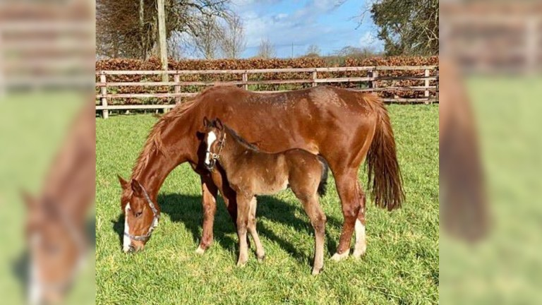 Mountarmstrong Stud's Due Diligence colt out of Orange Blossom, a half-sister to Good Vibes