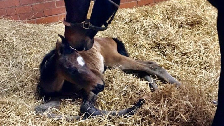 Gary and Lesley Middlebrook's Mendelssohn filly out of Street Cry mare Chime Hope