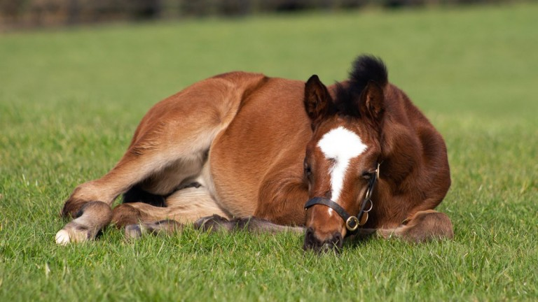 Coolmore's Galileo filly out of multiple Group winner Naples Bay takes a quick nap