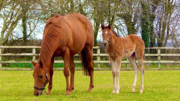 Christian Williams and Wayne Clifford's Havana Gold filly out of Golden Secret, a half-sister to Abbaye winner Gilt Edge Girl