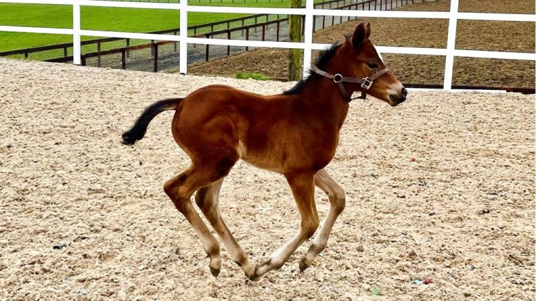 Bernardino Vanni's Blue Point filly out of Tulla Vaughan