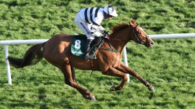 French Aseel: emphatic winner at Leopardstown before being purchased by Joe Donnelly