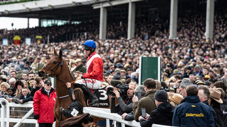 Envoi Allen: Irish star feared by the bookmakers ahead of the 2021 Cheltenham Festival