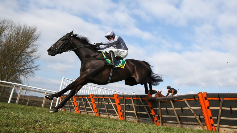 """Dan Skelton on My Drogo: """"He's a lovely horse. We're very lucky to have him."""""""