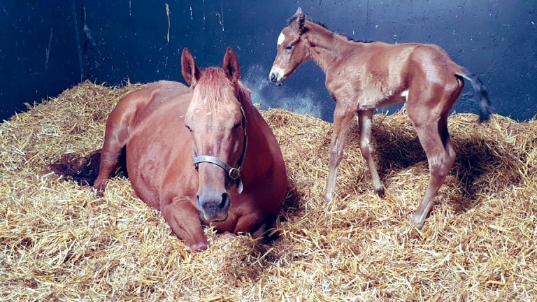Clara Stud's Kodiac filly out of Dutch Treaty, a half-sister to Golden Horde