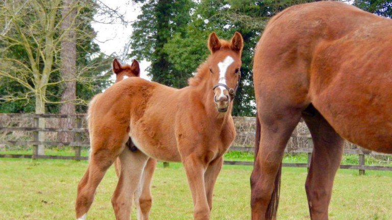 The National Stud's Flag Of Honour colt out of Madame Rouge