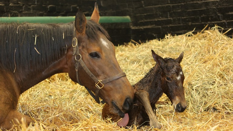 Kind, pictured here with her 2021 Kingman colt foal