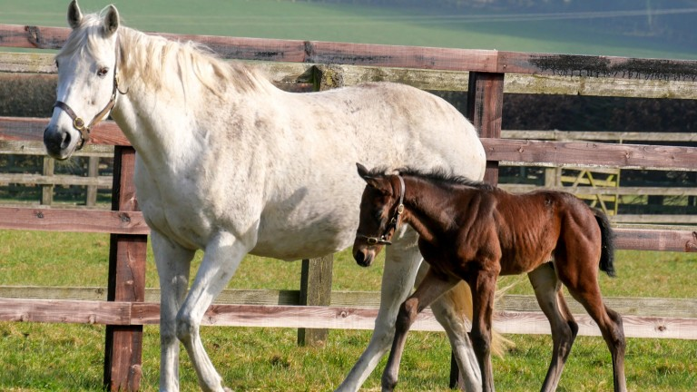Highclere Stud's Land Force colt out of the stakes-winning Dalakhani mare She Is Great