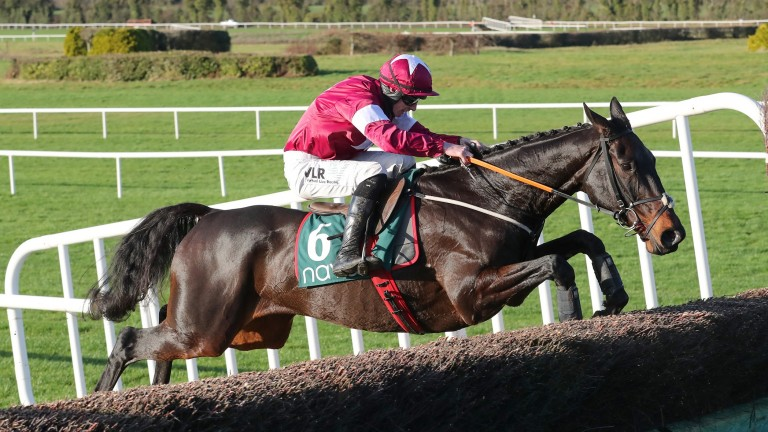 Defi Bleu: holds an entry for next week's Paddy Power Plate Handicap Chase at Cheltenham