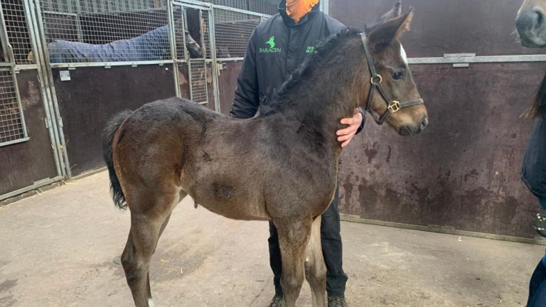 Craig and Laura Buckingham's Churchill filly out of Mill Point. Her dam will visit Cracksman next