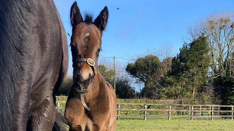 Piercetown Stud's Camelot filly out of Amchitka, a full-sister to Star Lahib and Moone Cross