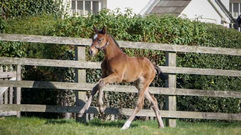 A Too Darn Hot filly out of Robin Geffen's winning mare, Astronomy's Choice