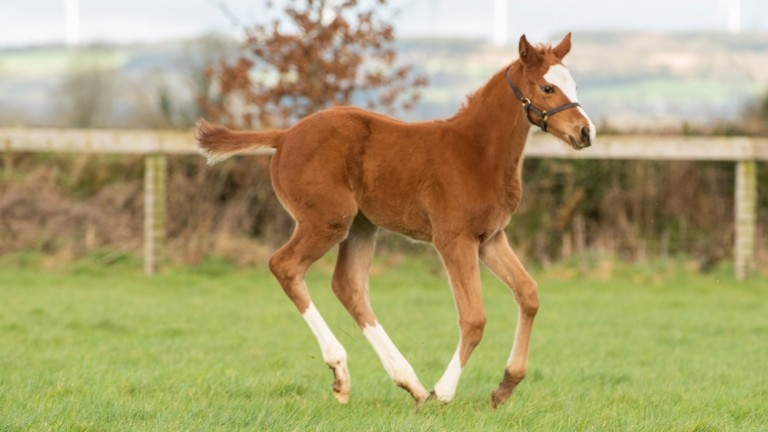 Coolmore's Galileo filly out of of dual Listed winner Missvinski, a full-sister to last year's Irish 1,000 Guineas winner Peaceful