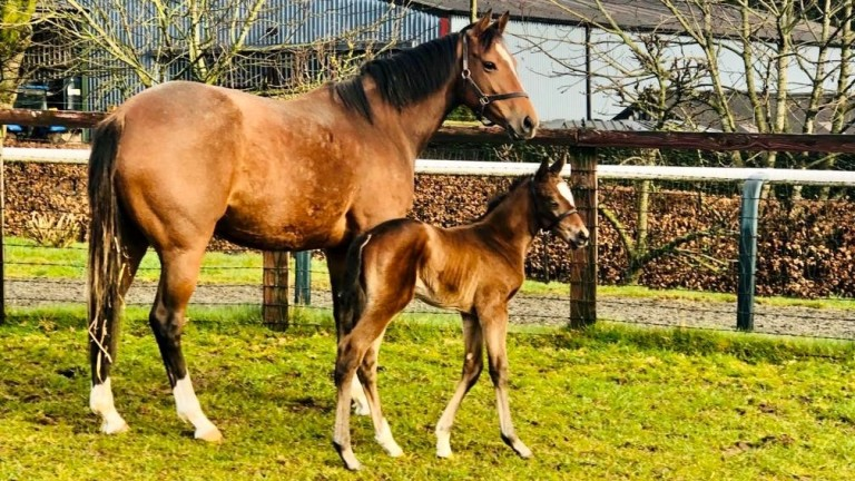 Goldford Stud's Daily Times, a Gleneagles half-sister to Newspaperofrecord, with her Blue Point filly