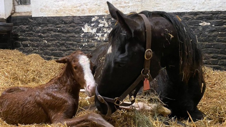 Byerley Stud's Pearl Secret filly out of Dreamily