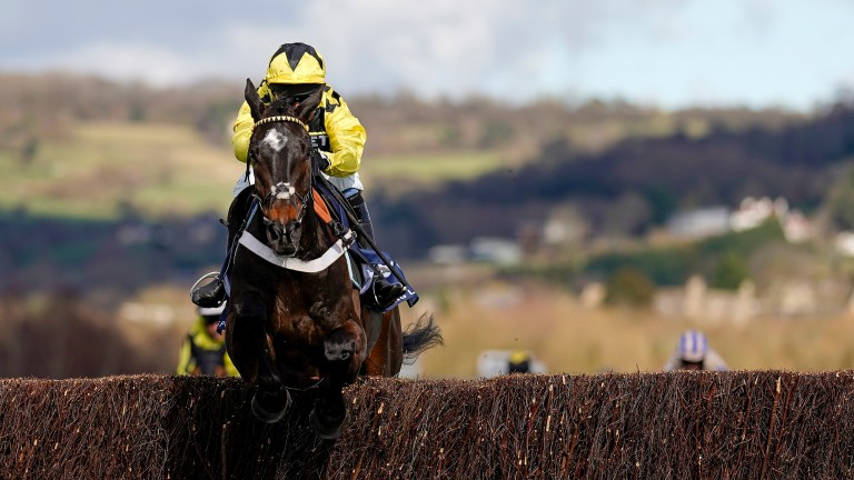 Shishkin: 4-4 over fences after his imperious display in the Arkle