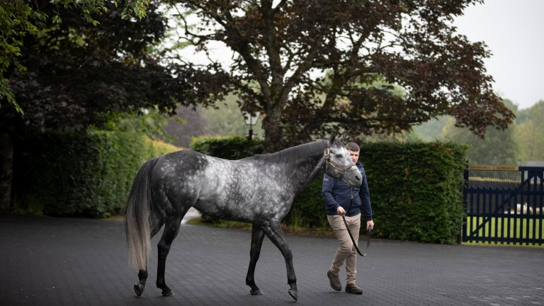 Caravaggio and Tobin Murphy at Coolmore