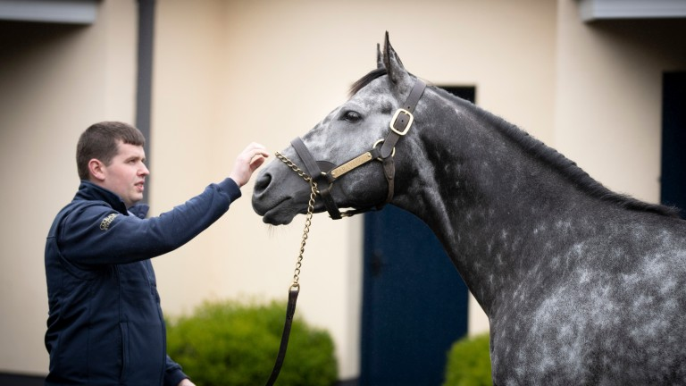 Caravaggio strikes a pose for Coolmore stallion man Tobin Murphy