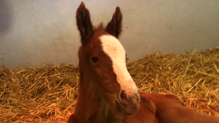 Meon Valley Stud's Frankel filly out of Dash To The Top, a full-sister to Oaks heroine Anapurna