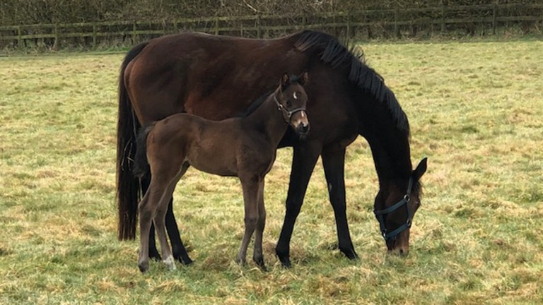 Nuthurst Farm Stud's Showcasing filly out of Dance Legend