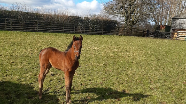 Fairfield House Stud's Maxios filly out of Vics Laststand