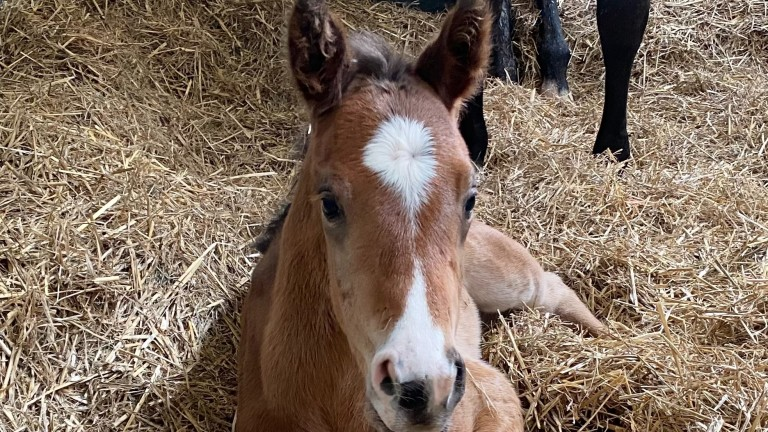 Denford Stud's Dream Ahead filly out of Albany Stakes heroine Illuminate