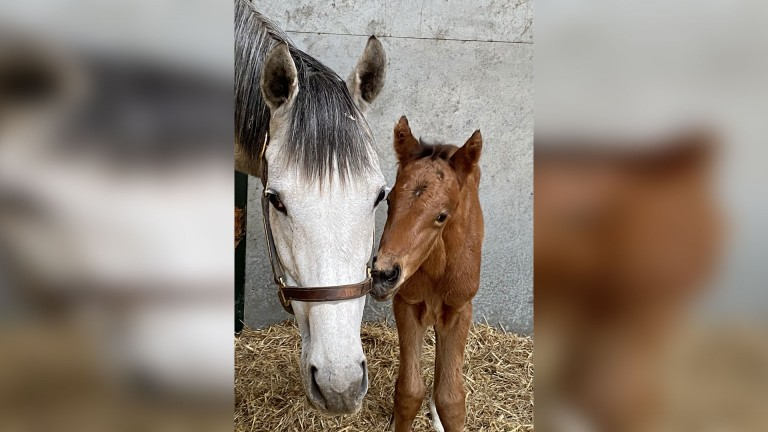 Denford Stud's dual Group 1 winner Coronet with her first foal, a bay colt by Frankel
