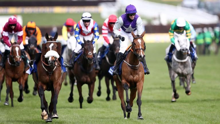 Mrs Milner (purple): winner of the Pertemps Final at Cheltenham