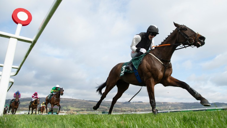 Flooring Porter towers over his rivals in the Stayers' Hurdle